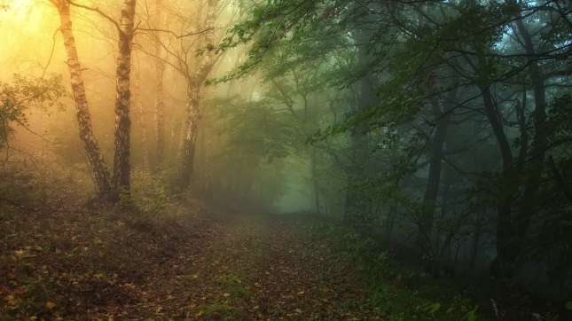 ws_Magical_Forest_Path_1920x1080.jpg